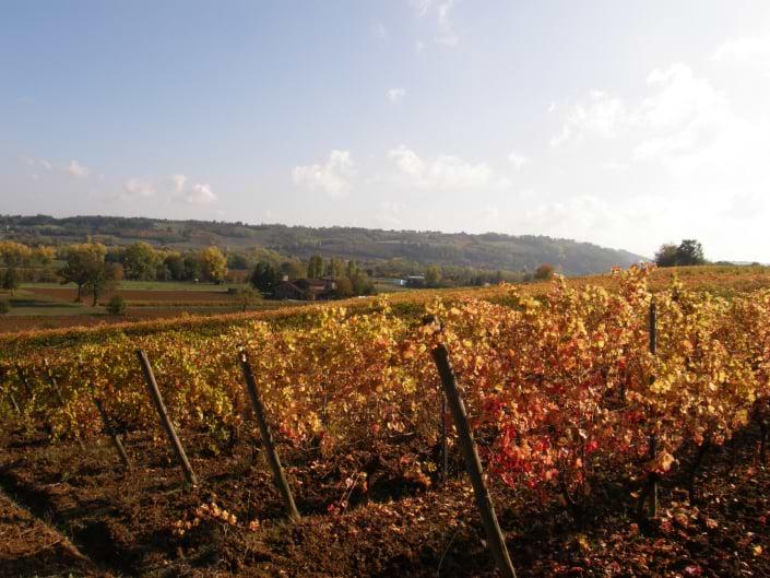 vigna-autunno-casa-benna-piacenza