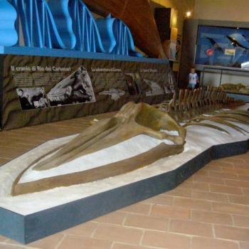 museo geologico castell'arquato